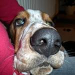 Hundeversicherung Vergleich 2013