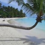 Malediven: Freies Foto eines Strandes auf den Malediven